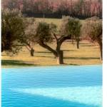 picina i camp d'oliveres